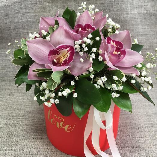 Орхидея 🌹