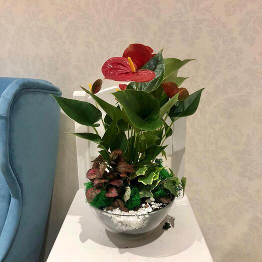 Тропический цветущий флорариум