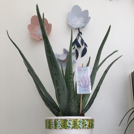 Алое вера: букеты цветов на заказ Flowwow