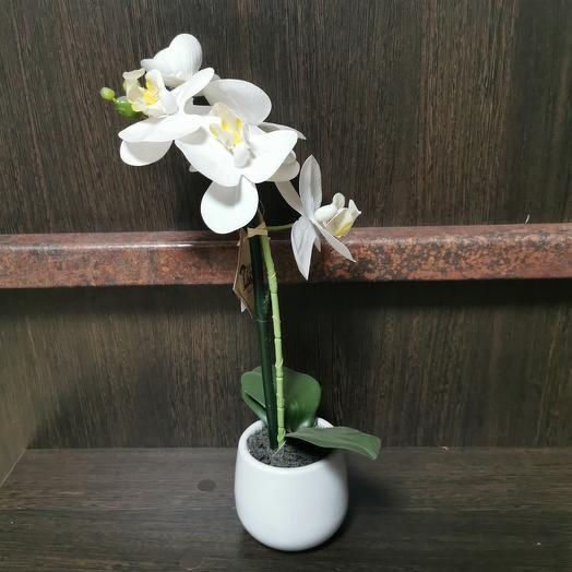 Орхидея люкс
