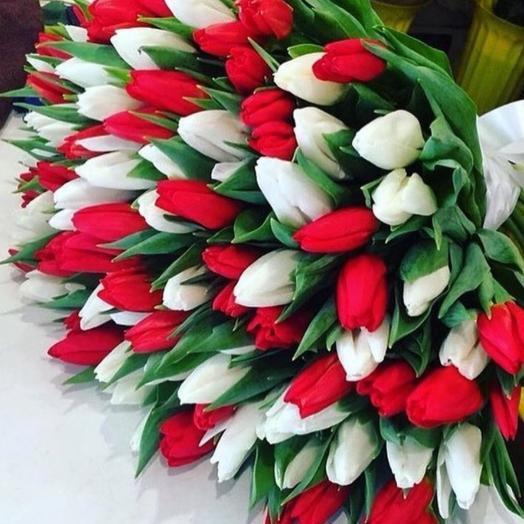 Букет из 101 красно-белого тюльпана