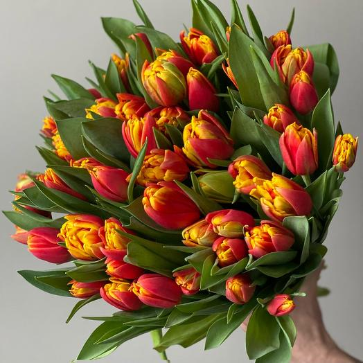 Пионовидный тюльпан красно-желтый Cilesta (51 шт)