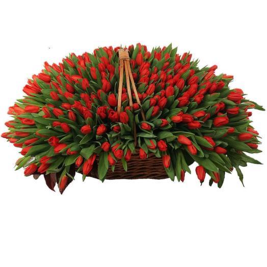 501 тюльпан Vip