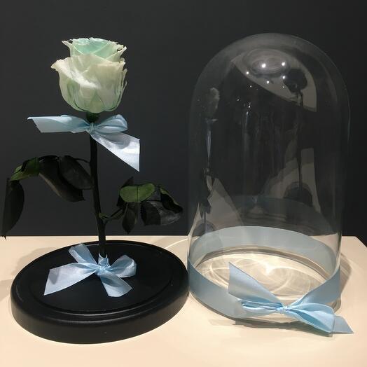 Роза нежно-зелёная в колбе (бутон до 6 см)