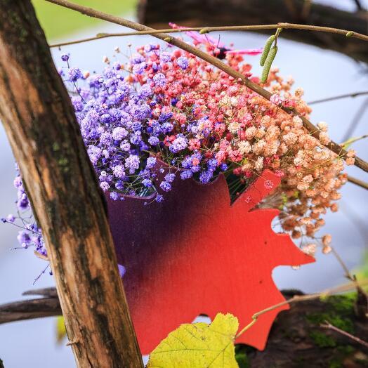 Градиент Осени