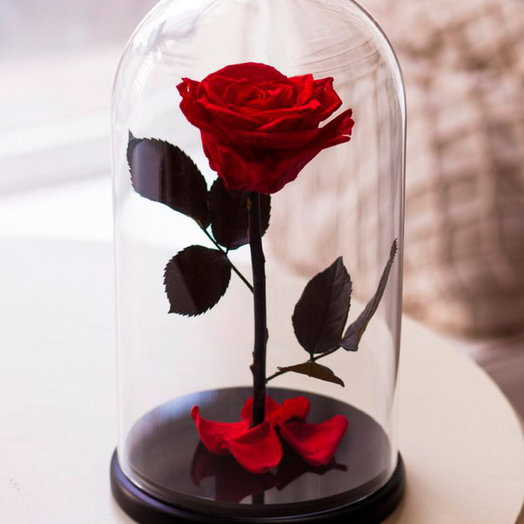 Красная роза в стеклянной колбе: букеты цветов на заказ Flowwow
