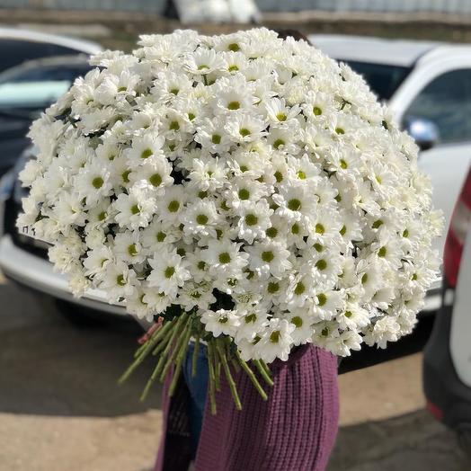 Букет из 51 белой хризантемы кустовой: букеты цветов на заказ Flowwow
