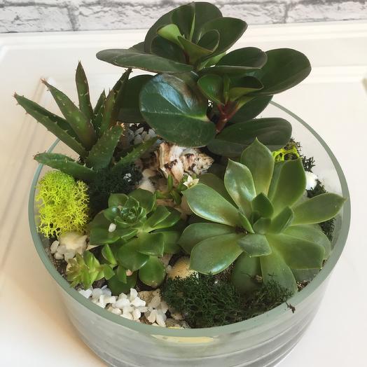 Флорариум «Каменный цветок»: букеты цветов на заказ Flowwow