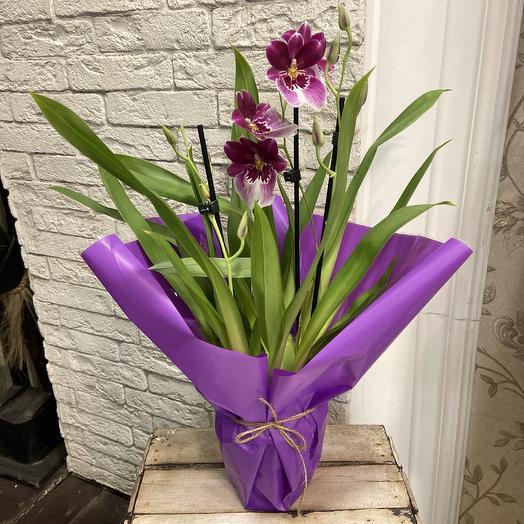 Орхидея мильтония в коллекцию: букеты цветов на заказ Flowwow