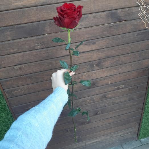 Красная роза Эквадор 80 см