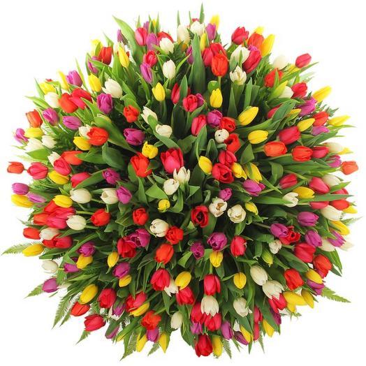 Тюльпаны 301 шт