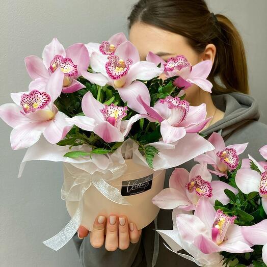 Орхидеи розовые