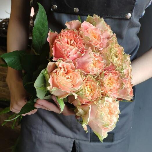 Роза Луиза 11