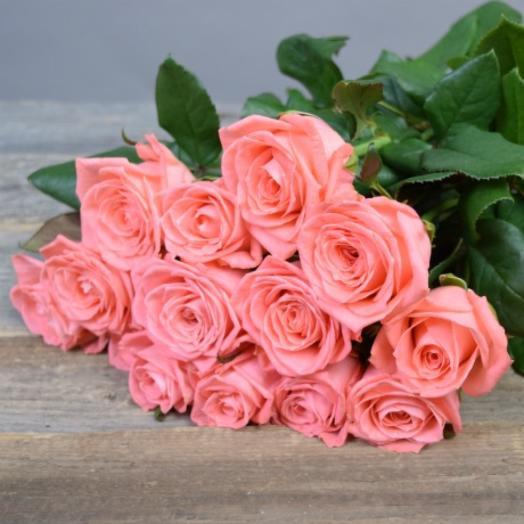Роза Карина 13