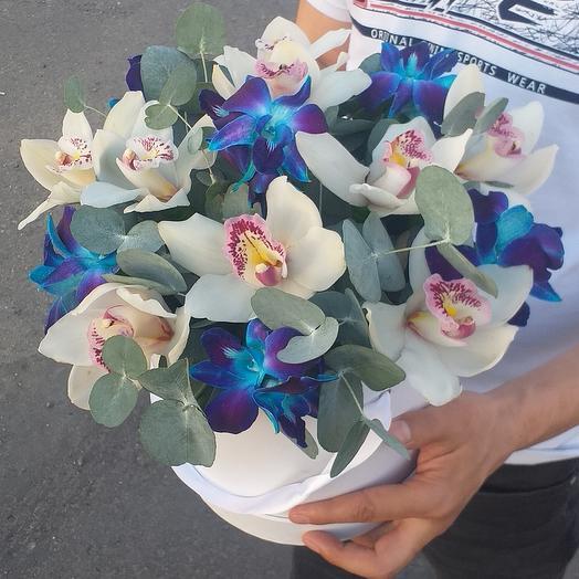 Орхидея в каробке