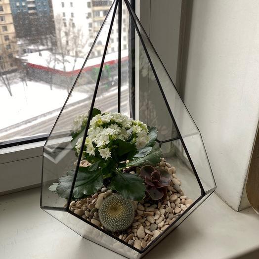 Снежный сад