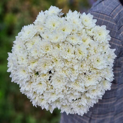 Хризантема кустовая 15 шт