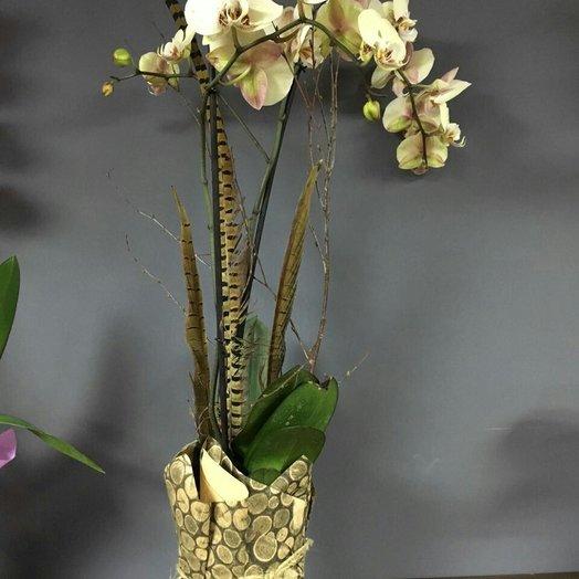 podarochnie-tsveti-orhideya-foto-dostavka-nedorogih-buketov-po-moskva-deshevo