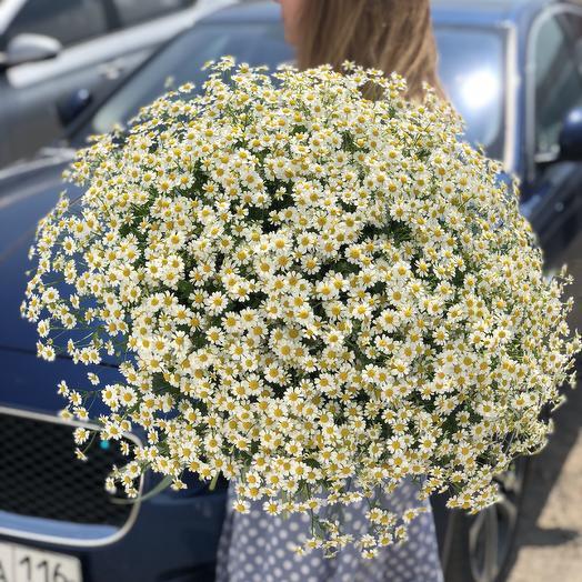 Почувствуй лето: букеты цветов на заказ Flowwow