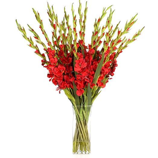 19 красных гладиолусов: букеты цветов на заказ Flowwow