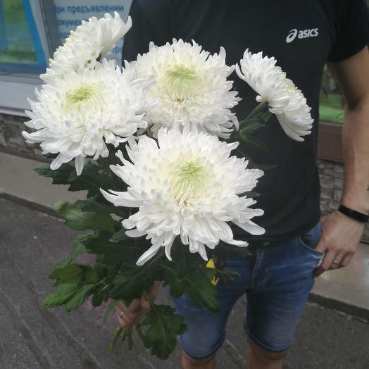 Сказочная огромная хризантема