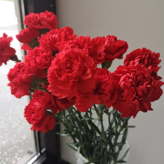 Гвоздика красная: букеты цветов на заказ Flowwow