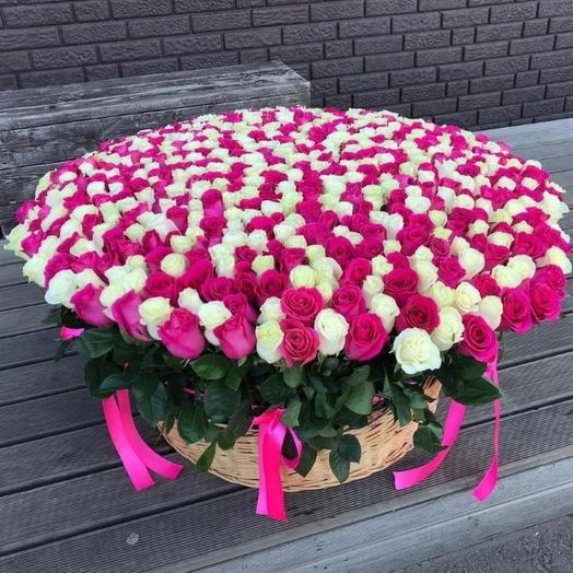 Корзина из 555 роза