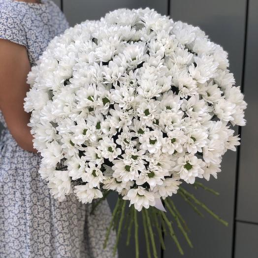 The bouquet of white camomile chrysanthemums of the Air, a cloud of 35 branches