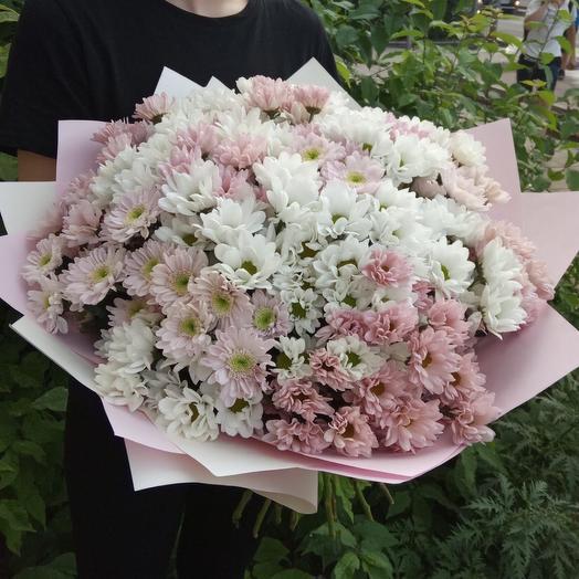 35 кустовых хризантем