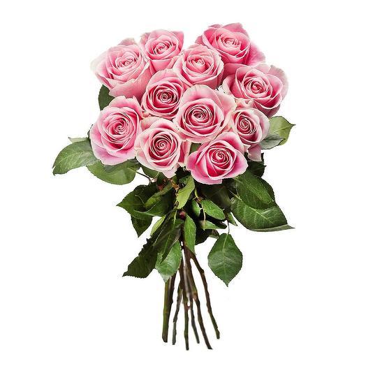Роза розовая (9 шт)  с лентой