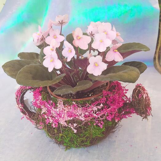 Фиалочка в леечке из сухоцветов(кашпо)