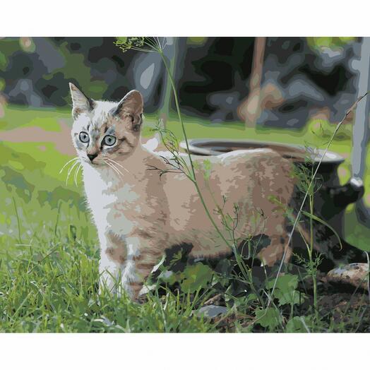 Картина по номерам Кошка на прогулке