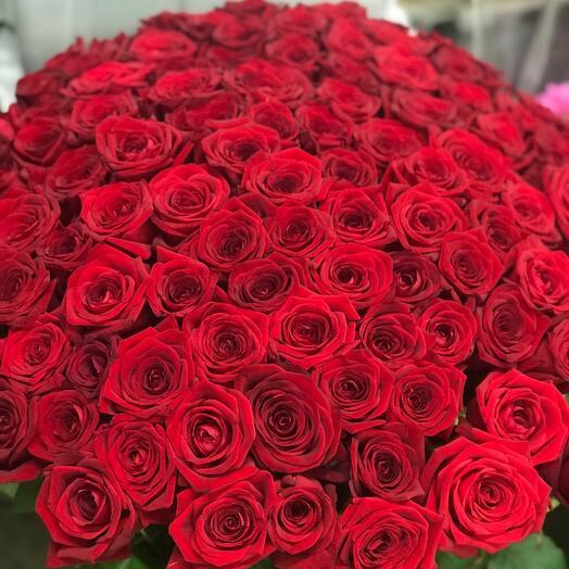 101 роза Red