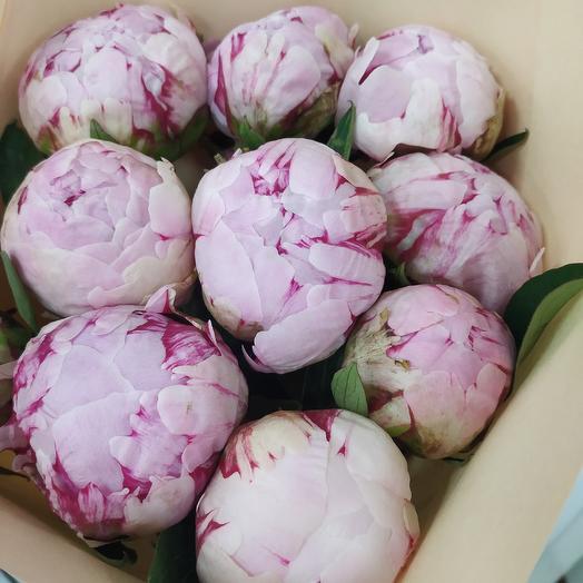 9 свежих пиона Сара Бернар: букеты цветов на заказ Flowwow