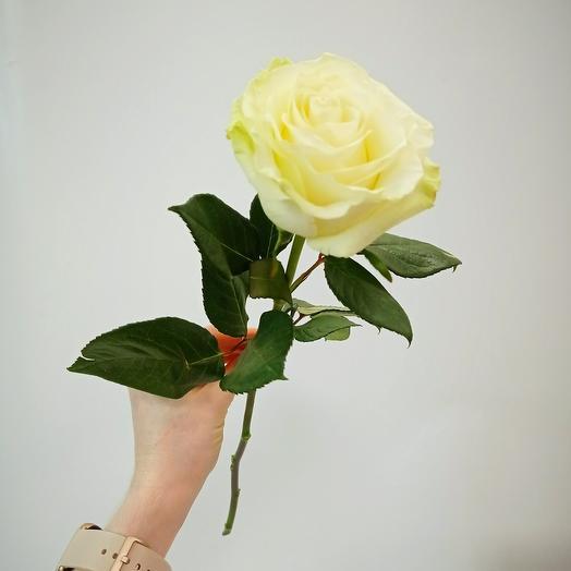 Белая пионовидная роза