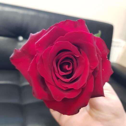 Роза алая