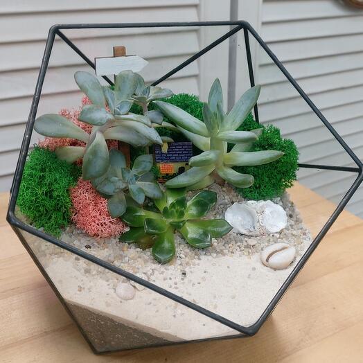 Флорариум геометрическая чаша M