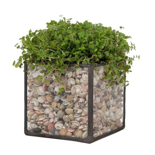 Стеклянное кашпо с растением «SOLLY IN THE DEEP»: букеты цветов на заказ Flowwow