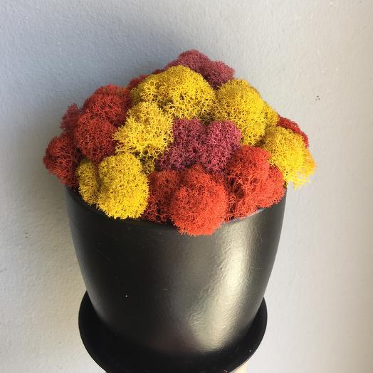 Стабилизированный мох цветной