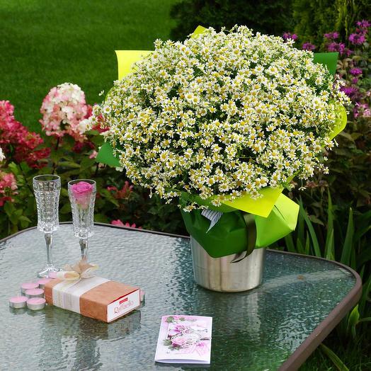 Букет ромашек (танацетум): букеты цветов на заказ Flowwow