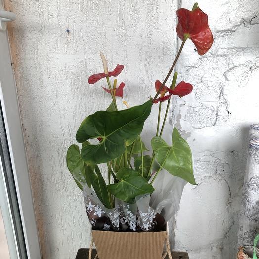 Антуриум: букеты цветов на заказ Flowwow