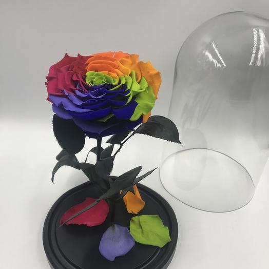 Радужная роза в колбе KING: букеты цветов на заказ Flowwow