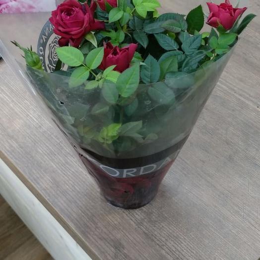 Роза в горшке