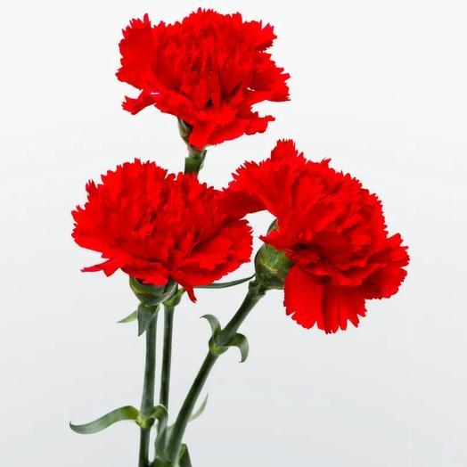 3 гвоздики: букеты цветов на заказ Flowwow