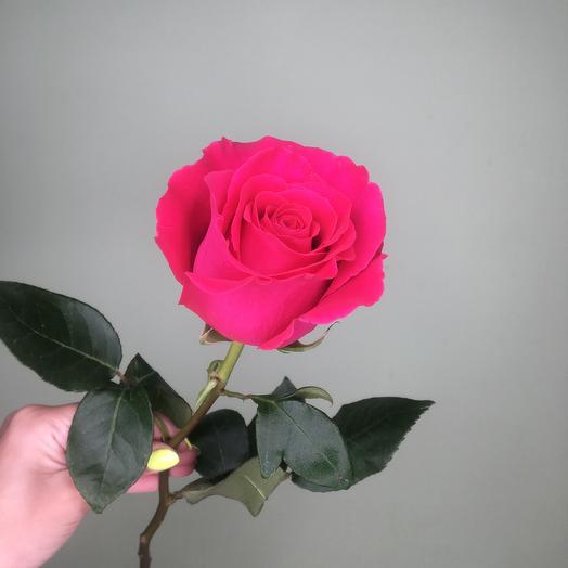 Роза пинк флойд