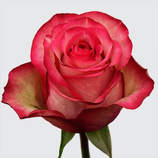 Роза Эквадор Карусель