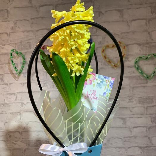Гиацинт желтый