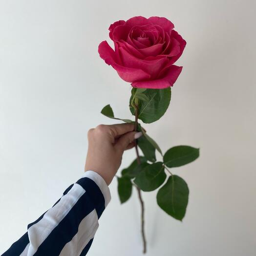 Роза Эквадор 60 Розовая