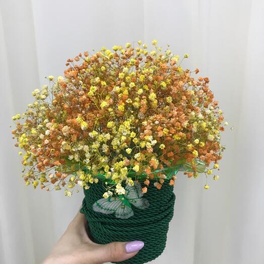 Сухоцвет из крашенной гипсофилы