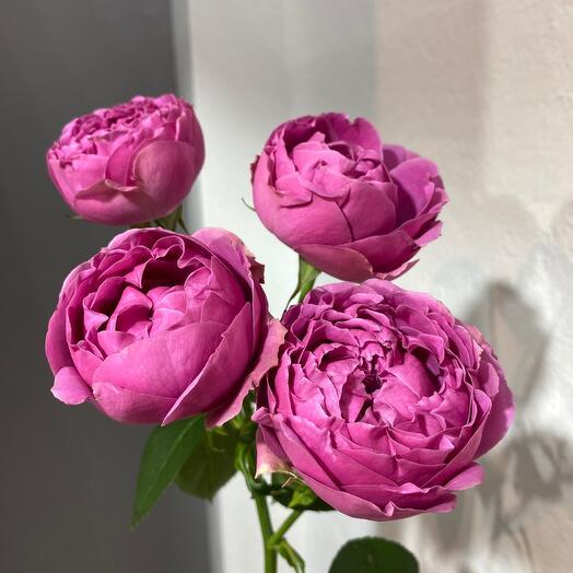 Пионовидная кустовая роза Мисти Баббл